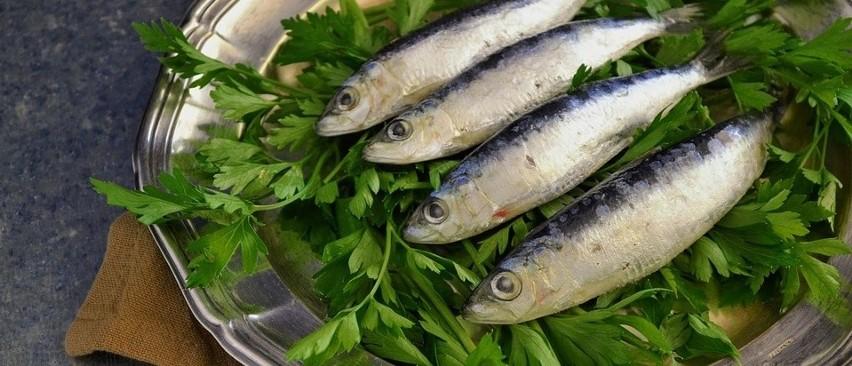 Szprot najczęściej wpadał do sieci [dane o rybołóstwie morskim]