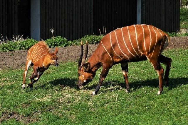 Opolski ogród zoologiczny to jedno z najładniejszych takich miejsc w Polsce.