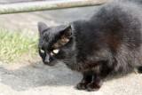 Kto morduje koty w Toruniu i okolicy? Policja nie odpuszcza sprawy