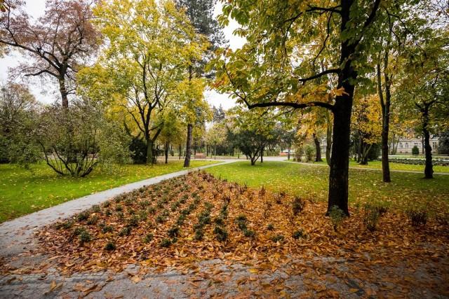 Teraz też nie jest brzydko, ale wiosną w parku Witosa będzie zdecydowanie lepiej