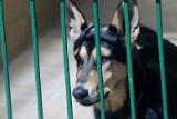 Te psy z wrocławskiego schroniska szukają domu. Pomóż! [ZDJĘCIA]