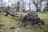 Uwaga! Burze z gradem na północy województwa śląskiego. Jest ostrzeżenie. Będzie wiał silny wiatr, nawet 90 km/h