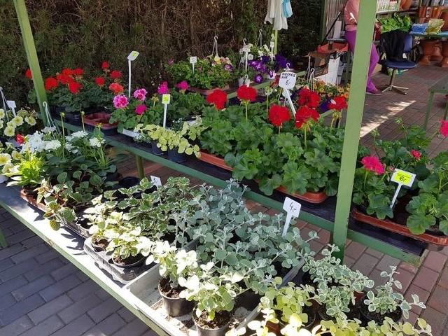 Kupujesz rozsadę warzyw, kwiatów czy drzewka? Uważaj na choroby! W ogrodzie doglądaj roślin, czy nie są chore.