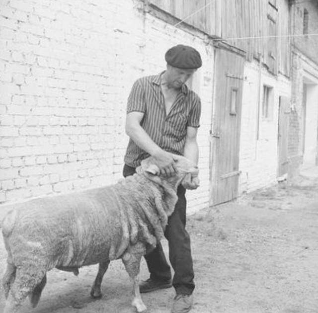 """Rolnicza Spółdzielnia Produkcyjna """"Przyjaźń"""". Rolnik z owcą na podwórzu"""
