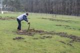 Leszno: Dziki po raz kolejny zniszczyły boisko w Zaborowie. Czy powstrzyma je nowe ogrodzenie? [ZDJĘCIA]