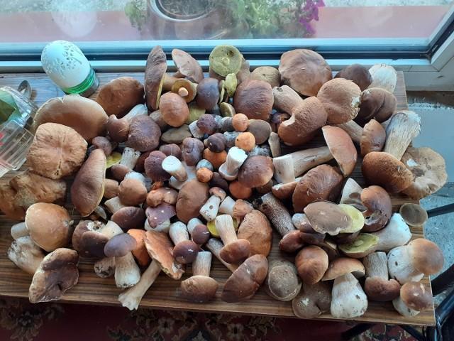 Opolskie. Wysyp grzybów w lasach. Zdjęcia internautów.