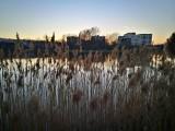 Piękna Dolina Trzech Stawów w Katowicach w wiosenne popołudnie ZDJĘCIA