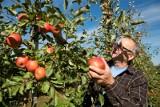 Polskie jabłka 2021. Czy muszą być takie drogie, jakie odmiany lubimy najbardziej, a jakie szczególnie cenią importerzy: 6.07.2021