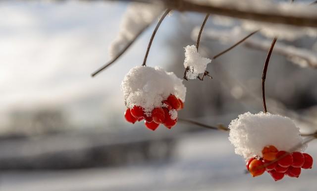Gdy zbyt długo jesień trzyma, nagle przyjdzie zima. Święta Barbara po lodzie, Boże Narodzenie po wodzie.