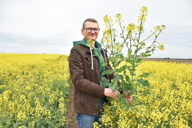 - Rzepak przezimował całkiem dobrze, chociaż chłodna wiosna opóźniła wegetację  - stwierdził Rafał Suchoń, rolnik z miejscowości Sadki w woj. kujawsko-pomorskim