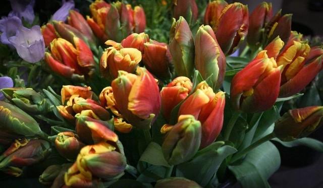 Życzenia na Dzień Kobiet dla mamy, siostry i teściowej. Wybierz wierszyk z okazji Dnia Kobiet i wyślij go 8 marca