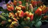 Dzień Kobiet 2021. Życzenia dla mamy, siostry i teściowej. Wybierz odpowiedni wierszyk z okazji Dnia Kobiet, fajne wiersze 8.03.21