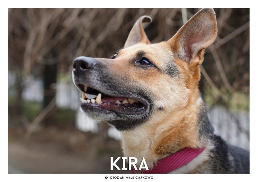 IMIĘ: KIRA (109/20)...