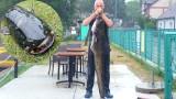 Wielki sum wyłowiony z lubuskiego jeziora. Taaakie ryby pływają w Łagowie!
