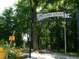 Będą kary za remont Parku Miejskiego w Sandomierzu? 30 czerwca mija termin zakończenia prac. Zobacz jak wygląda park [ZDJECIA]