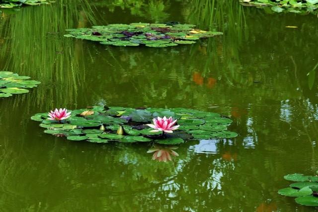 Oczko wodne to doskonały sposób gromadzenia deszczówki. W programie Moja Woda można dostać pieniądze na jego budowę