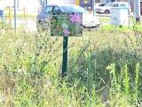 Toruń. Czy zastąpienie trawników łąkami, rzadsze koszenie trawy i obfite deszcze przynoszą miastu oszczędności?