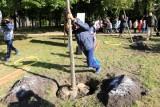 Mieszkańcy Mogilna dostaną drzewka