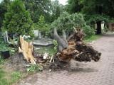 Skutki potężnej nawałnicy w Łodzi i regionie Blisko 2,5 tysiąca interwencji. 4 osoby zostały ranne. Zrujnowane miasto ZDJĘCIA
