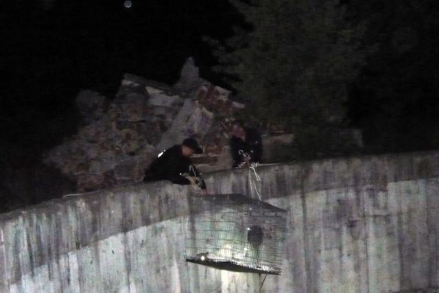 Po przybyciu na miejsce okazało się jednak, że zwierzę wpadło do 8-metrowego betonowego kręgu. Do pomocy w uwolnieniu malucha, wezwani zostali również ratownicy PSP oraz lekarz weterynarii.