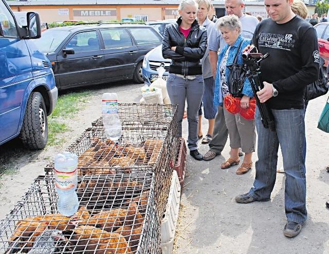 Kury są trzymane w klatkach, ale sprzedawane w workach
