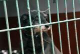Miliony na opiekę nad bezdomnymi psami i kotami we Wrocławiu