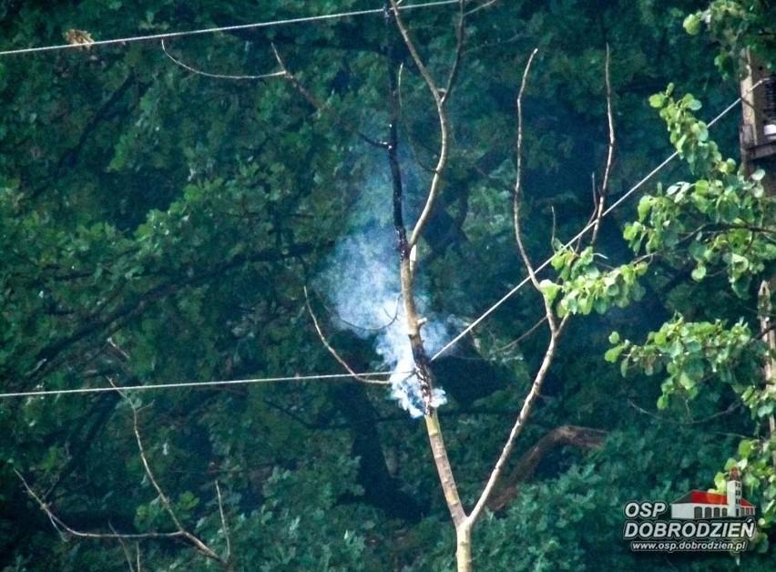Wczoraj wieczorem strażacy musieli usunąć drzewo w Klekotnej...