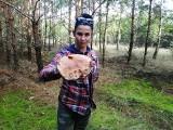 Prawdziwek gigant z kujawsko-pomorskiego lasu! Dwie grzybiarki znalazły go w okolicach Inowrocławia [zdjęcia]