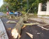 Drzewo runęło na samochód w centrum Łodzi. Konar usunęli strażacy ZDJĘCIA