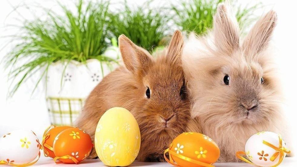 ŻYCZENIA WIELKANOCNE: Tradycyjne rodzinne życzenia na Wielkanoc ...