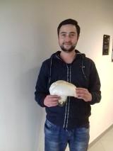 Wow! Nasz Czytelnik znalazł pieczarkę ważącą 700 gramów! Ten gigantyczny okaz został znaleziony w okolicach Babimostu