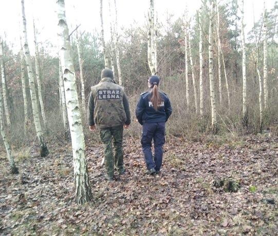 Policjanci i leśnicy wspólnie zwalczają złodziei stroiszu.