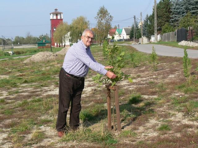 """To jest dąb """"Mirek"""" na pamiątkę byłego burmistrza Baranowa Mirosława Pluty, który złożył wniosek na rewitalizację naszej miejscowości - tłumaczy Eugeniusz Durda, lider klubu."""
