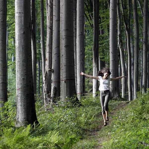 Niedawno naukowcy odkryli, że drzewa wydzielają fitoncydy, substancje mające właściwości bakteriobójcze i grzybobójcze.