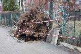 Wichura w Bielsku-Białej i powiecie bielskim: połamane drzewa, zniszczona stodoła ZDJĘCIA