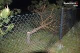 Zuchwała kradzież drzew w Rybniku. Wycinali w lesie i na prywatnej działce