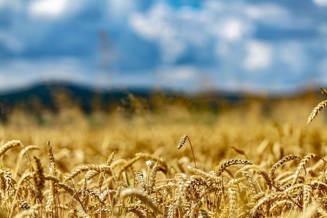 - Będą dopłaty do paliwa rolniczego, ale będą także znaczące dopłaty dla tych, którzy będą chcieli dokonać restrukturyzacji niewielkiego gospodarstw rolnego, dla gospodarstw ekologicznych - zapowiadał 9 października Jarosław Kaczyński. 7 kluczowych zmian w rolnictwie w ramach Polskiego Ładu - to zapowiedzieli przedstawiciel rządu w Przysusze --->