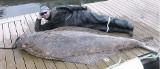 Złowił halibuta-giganta - 196 kilogramów! Ryba wyciągnęła łódź na otwarty Atlantyk
