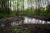 Wrocławskie Inwestycje złamały przepisy ustawy o ochronie przyrody? Jest zgłoszenie na policję