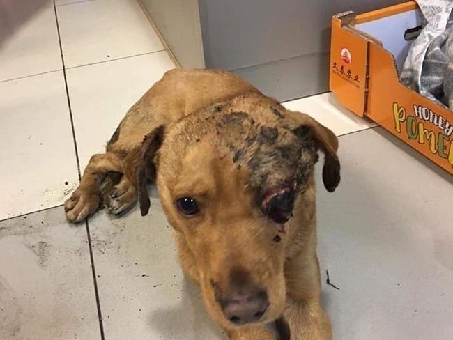 Ten pies był zakopany w okolicy wsi Borowiec i Różanówka w gminie Siedlisko 6 stycznia 2019 roku. Jest możliwe, że stracił przytomność i ocknął się pod ziemią. Miał szczęście w nieszczęściu, że trafił na dobrego człowieka, który uratował mu życie