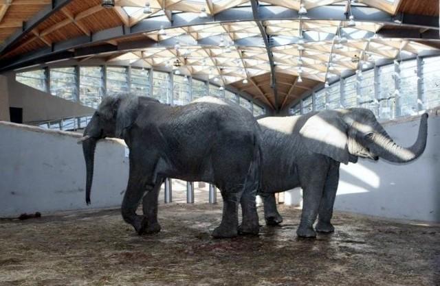Dach słoniarni najczęściej przecieka po kilkudniowych intensywnych opadach deszczu