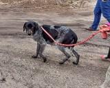 Toruńscy obrońcy praw zwierząt uwalniają psy z łańcuchów. Potrzebna jest pomoc finansowa
