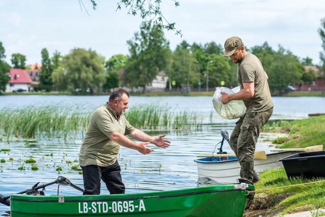 Około 1150 narybku węgorzy i 70 tys. sandaczy  trafiło do jezior: Klasztorne Górne i Dolne w Strzelcach Kraj. we wtorek 2 czerwca