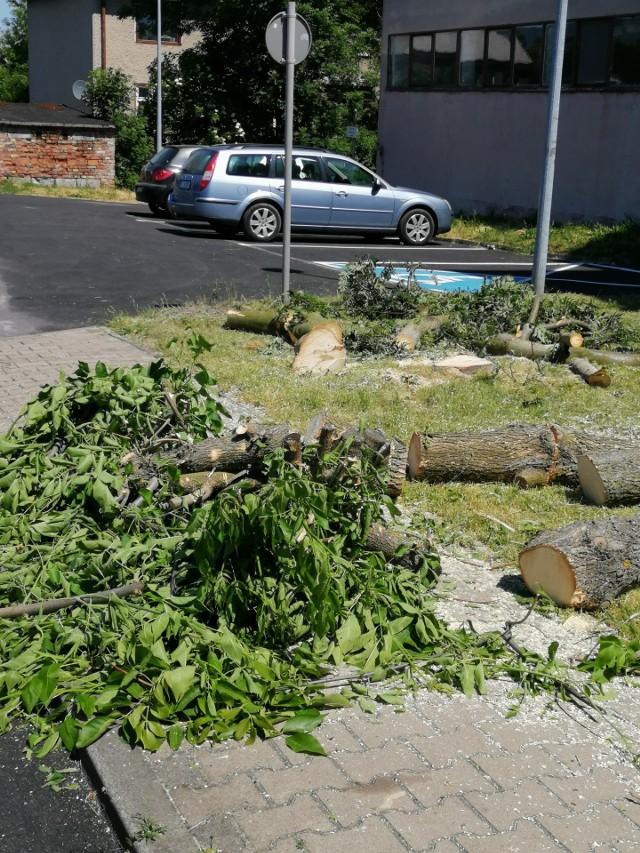 Wycięte drzewa w Szprotawie