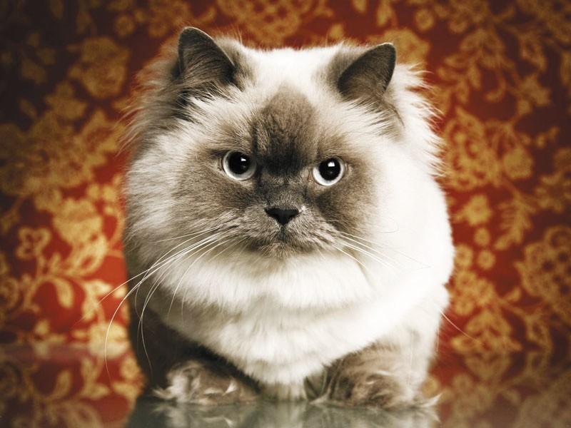 Wszystkie koty – czy to rasowa arystokracja, czy piękne w swojej różnorodności dachowce – potrzebują ciepła, pełnej miseczki i towarzystwa kochającego człowieka. Pamiętajmy o tym nie tylko od święta.