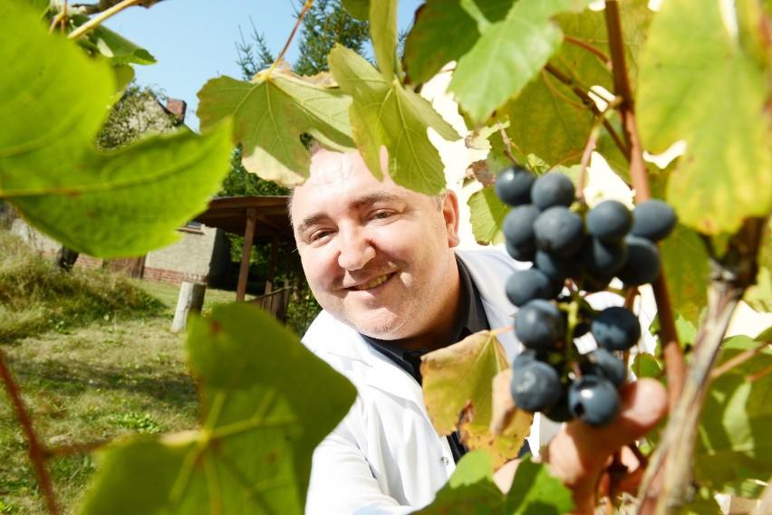 Lekarz rodzinny Tadeusz Kiwka prowadzi praktykę w Zaborze. - Winiarstwo to moje hobby. Robię głównie wina czerwone - mówi