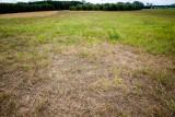 Według pierwszego raportu Instytutu Uprawy Nawożenia i Gleboznawstwa susza w Polsce jest, ale nie w woj. podlaskim