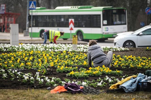Sadzenie wiosennych kwiatów ma trwać do 27 marca.