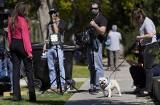 Hollywood: Ameryka żyje kradzieżą piesków Lady Gagi. Bohaterski obrońca w szpitalu, do akcji wkracza FBI (VIDEO)