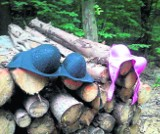W dolnośląskich lasach wysyp grzybów i... damskiej bielizny